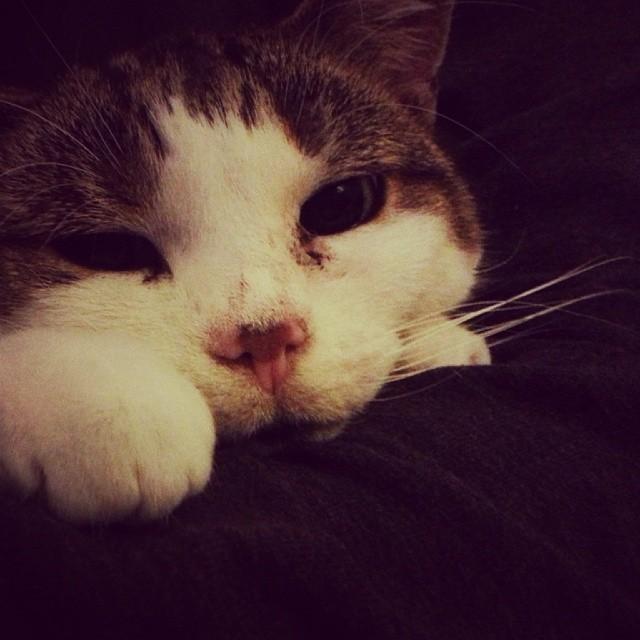 Kirby Cat